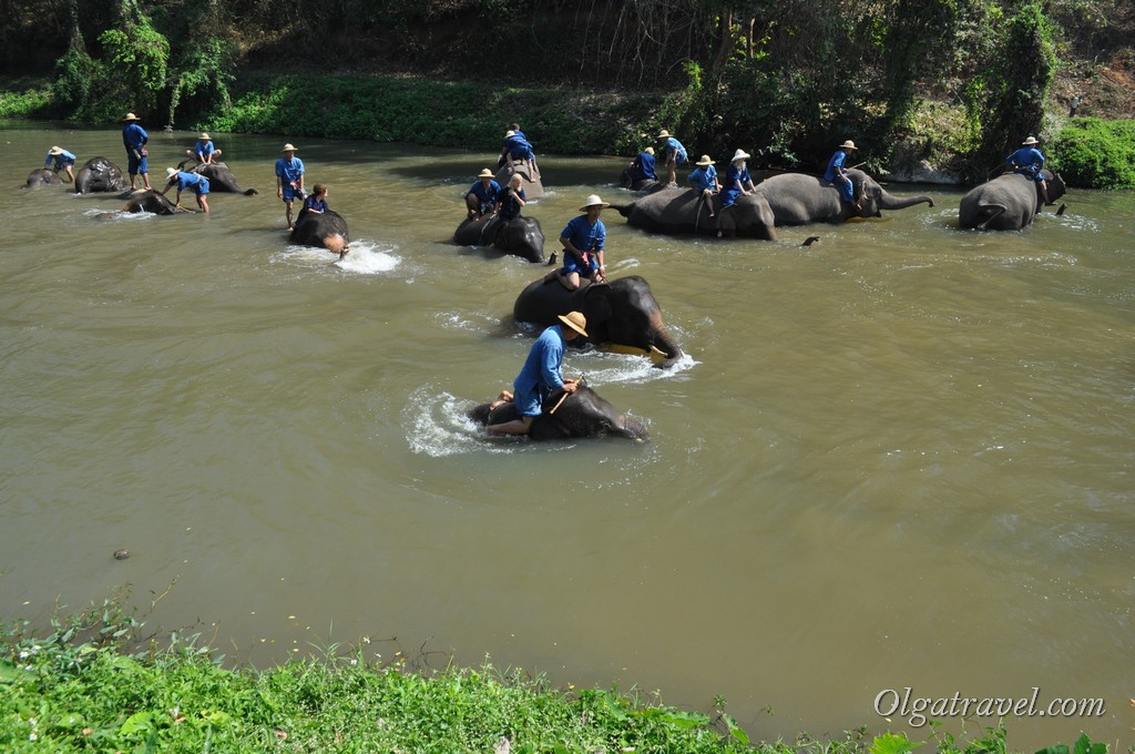 Thai_Elephant_Conservation_Center_22