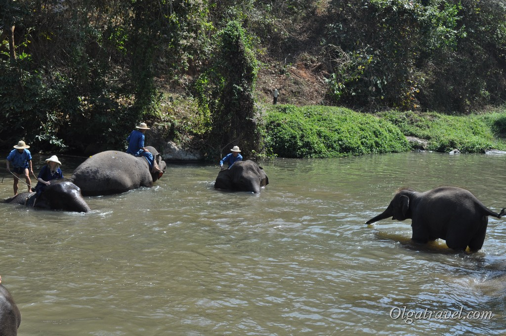 Thai_Elephant_Conservation_Center_24