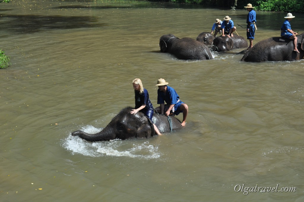 Thai_Elephant_Conservation_Center_26