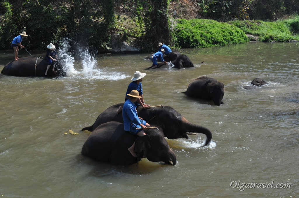 Thai_Elephant_Conservation_Center_27