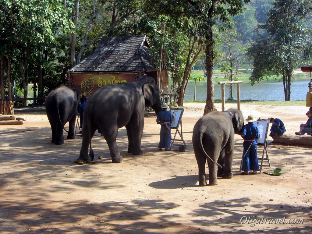 Слоны рисуют картины