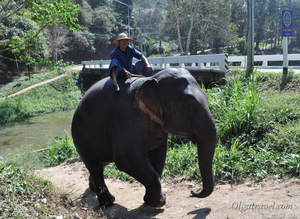 слоны в Таиланде
