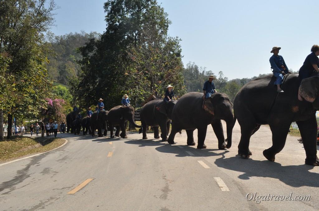шоу слонов в Таиланде