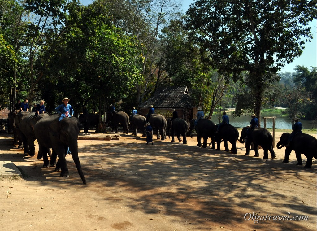 Thai_Elephant_Conservation_Center_37-1