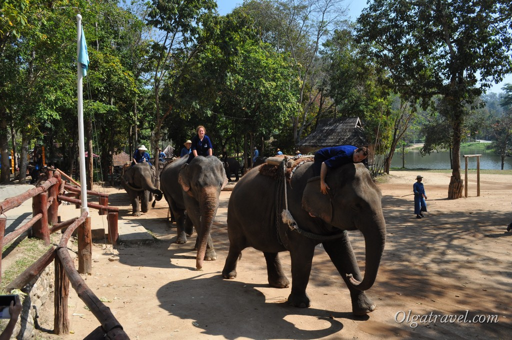 Thai_Elephant_Conservation_Center_39