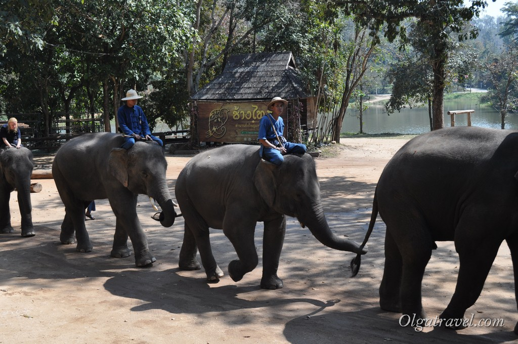 Thai_Elephant_Conservation_Center_40