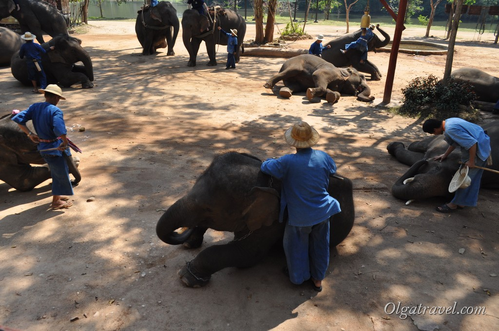 Thai_Elephant_Conservation_Center_41