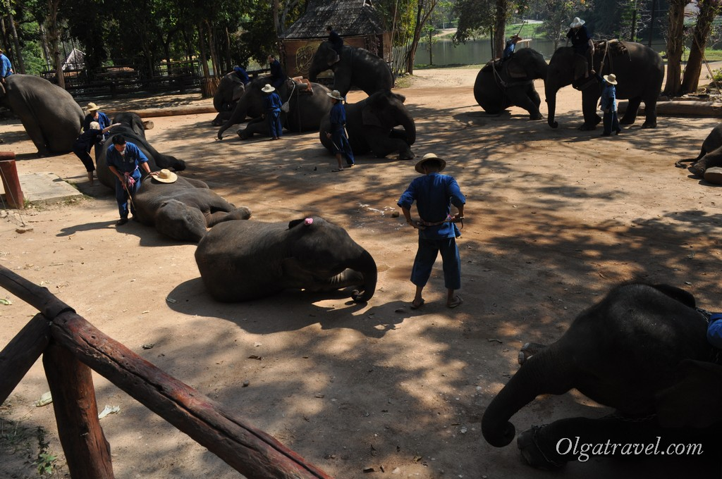 Thai_Elephant_Conservation_Center_42
