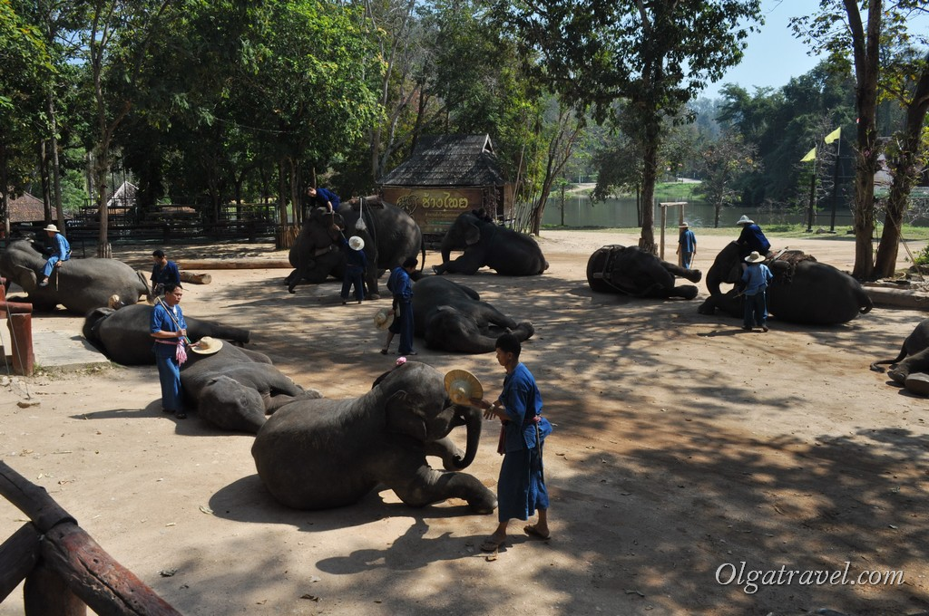 Thai_Elephant_Conservation_Center_43
