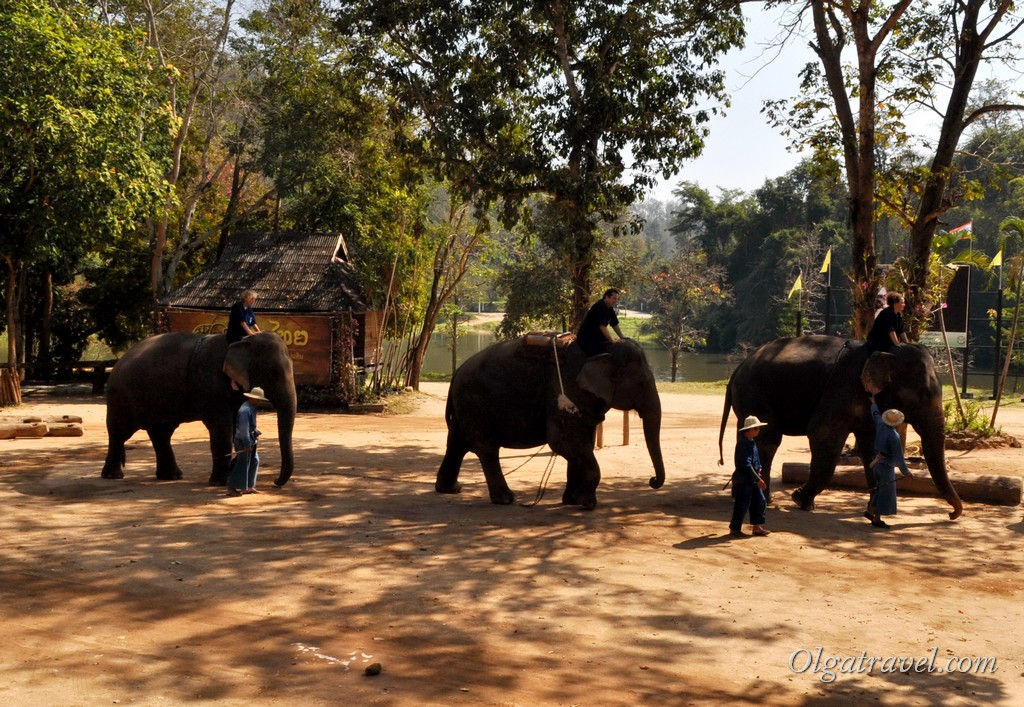 Thai_Elephant_Conservation_Center_44-1