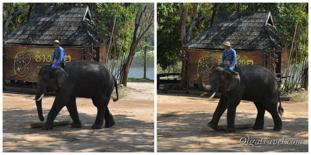 Thai_Elephant_Conservation_Center_53