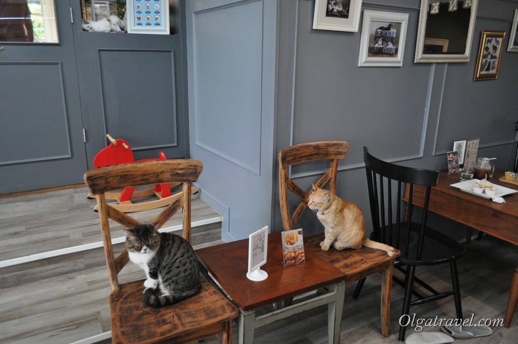 Chiang_Mai_cat_caffe_11