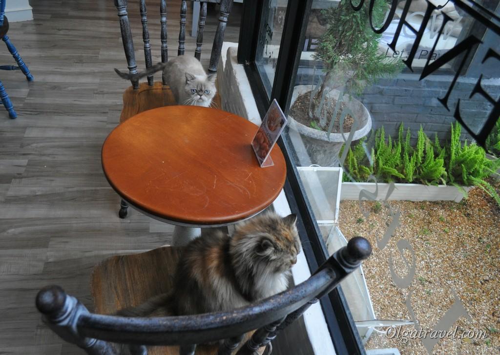 кошачье кафе Чианг Май