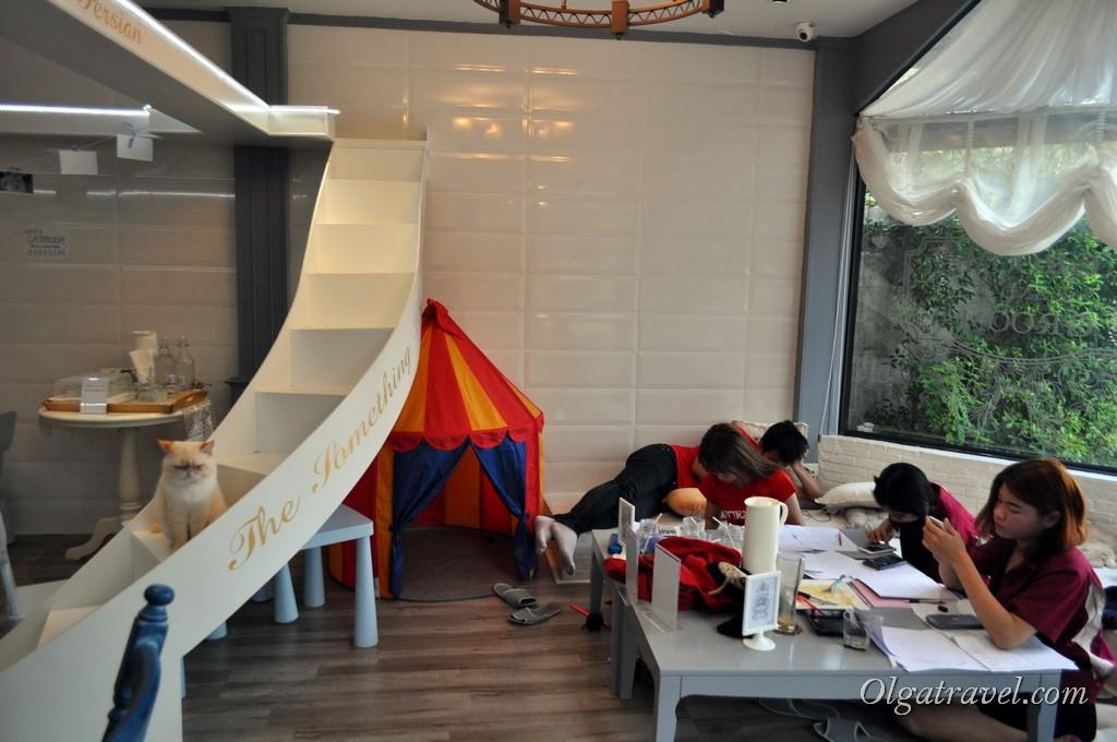 студенты в чианг мае