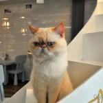Что посмотреть в Чианг Мае: кошачье кафе (котокафе) для любителей котиков :) Отзыв, фото и видео