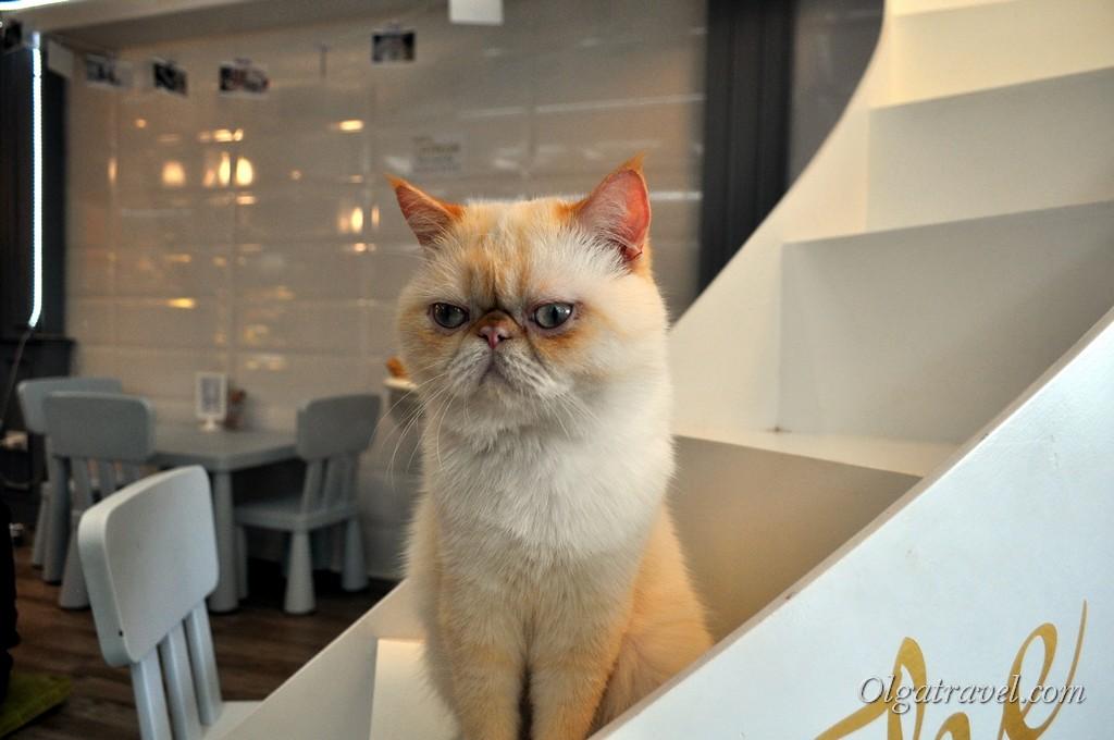 Самый классный котик!