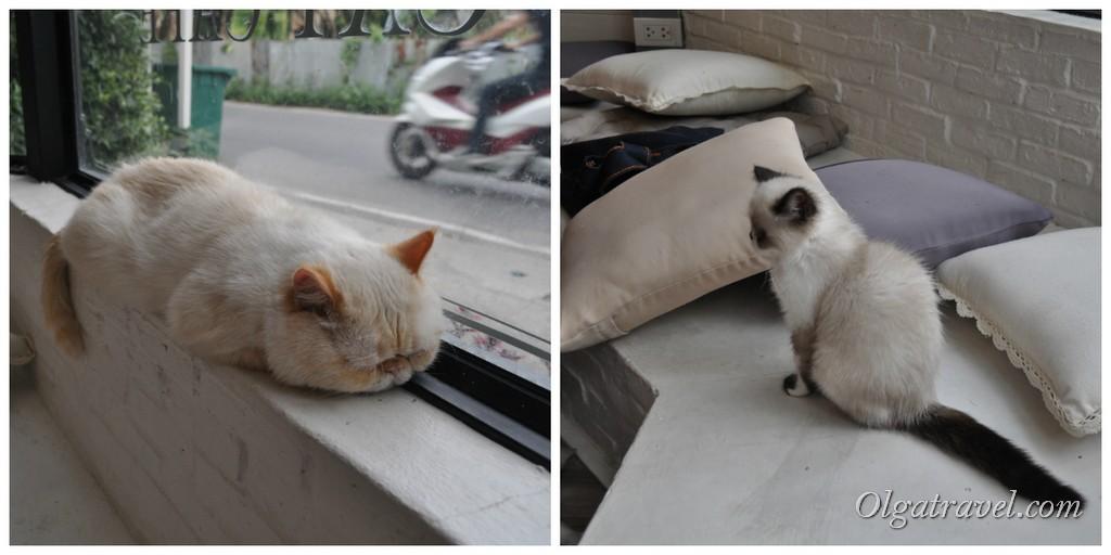 Chiang_Mai_cat_caffe_34