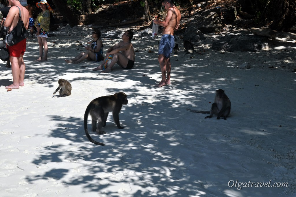 Phi_Phi_Monkey_beach_10