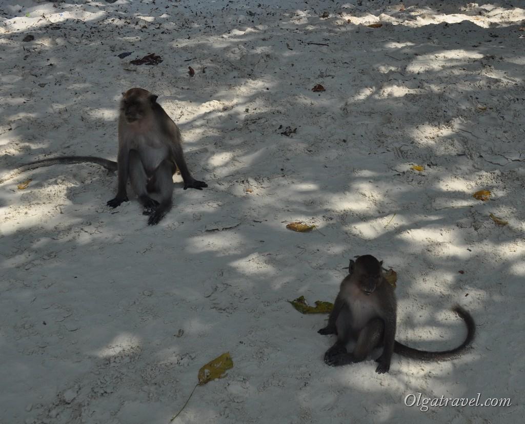 Phi_Phi_Monkey_beach_13