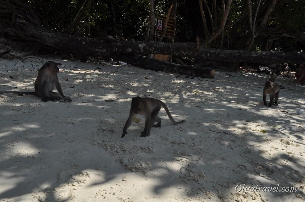обезьяний пляж