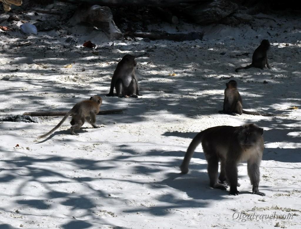 обезьяны на пляже