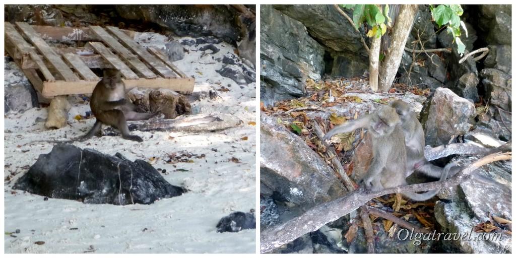 обезьяны пляж Пхи Пхи