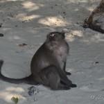 Monkey Beach или обезьяний пляж на Пхи Пхи: кого больше – туристов или обезьян? :)