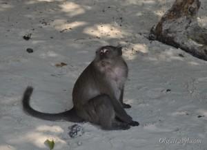 Phi_Phi_Monkey_beach_30
