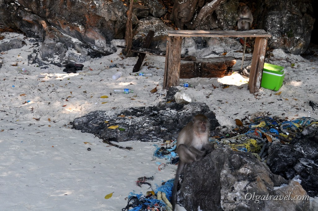 пляж обезьян