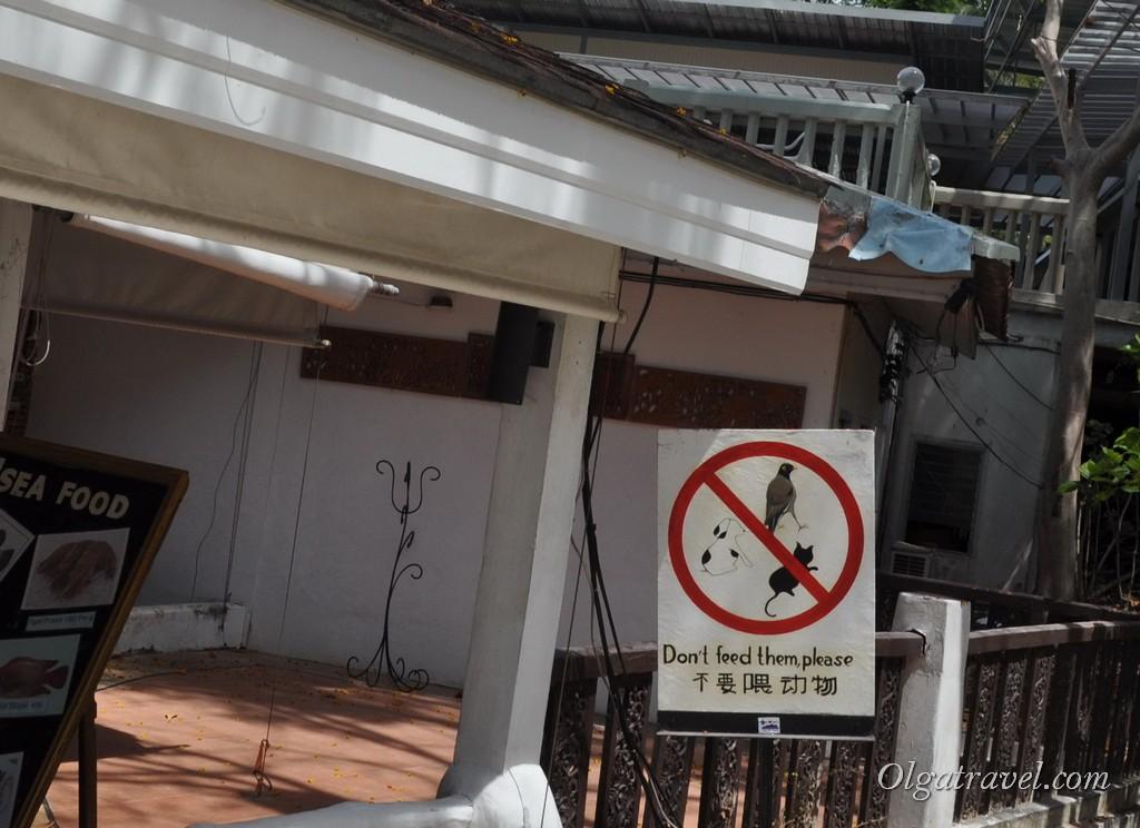 Таиланд животные