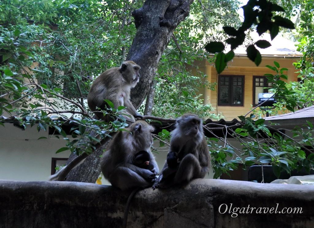 Таиланд обезьяны