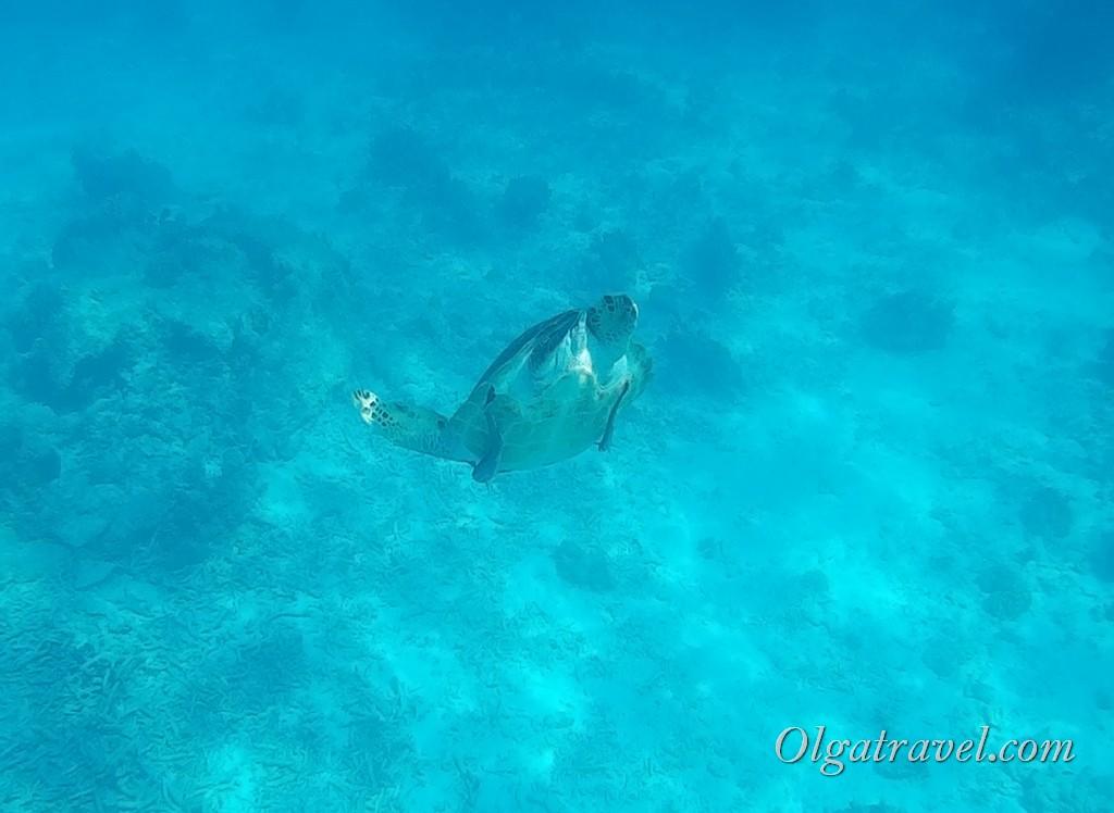 морская черепаха Таиланд