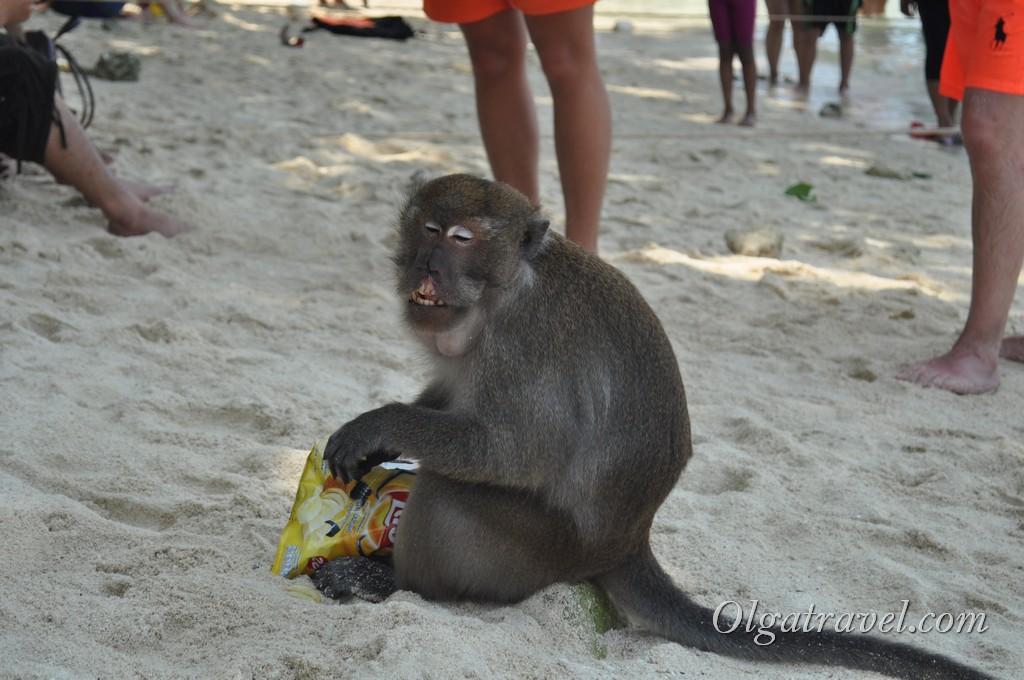 обезьяны краби
