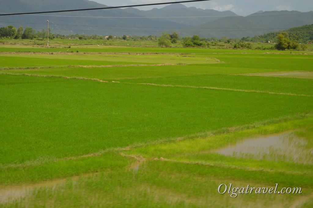 Нячанг рисовые поля