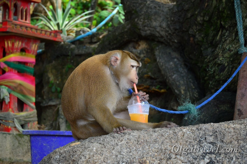 Пхукет обезьяны на пляже