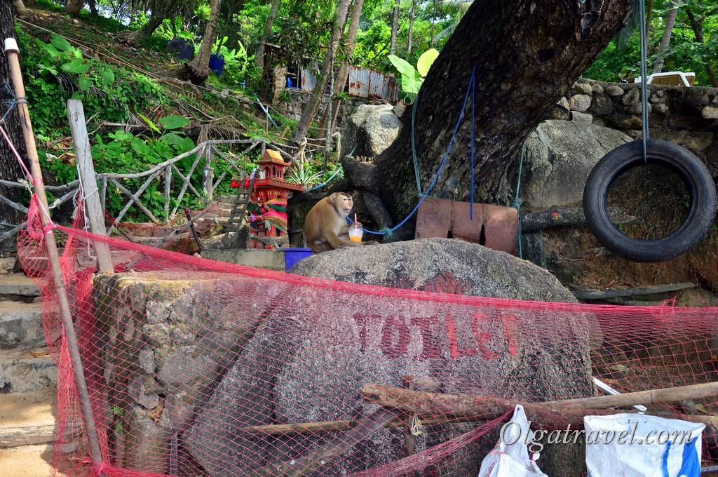 Пхукет обезьяны
