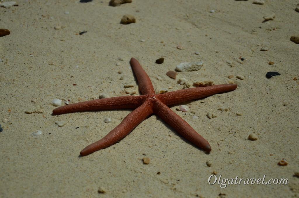 Phuket-coral-island-12
