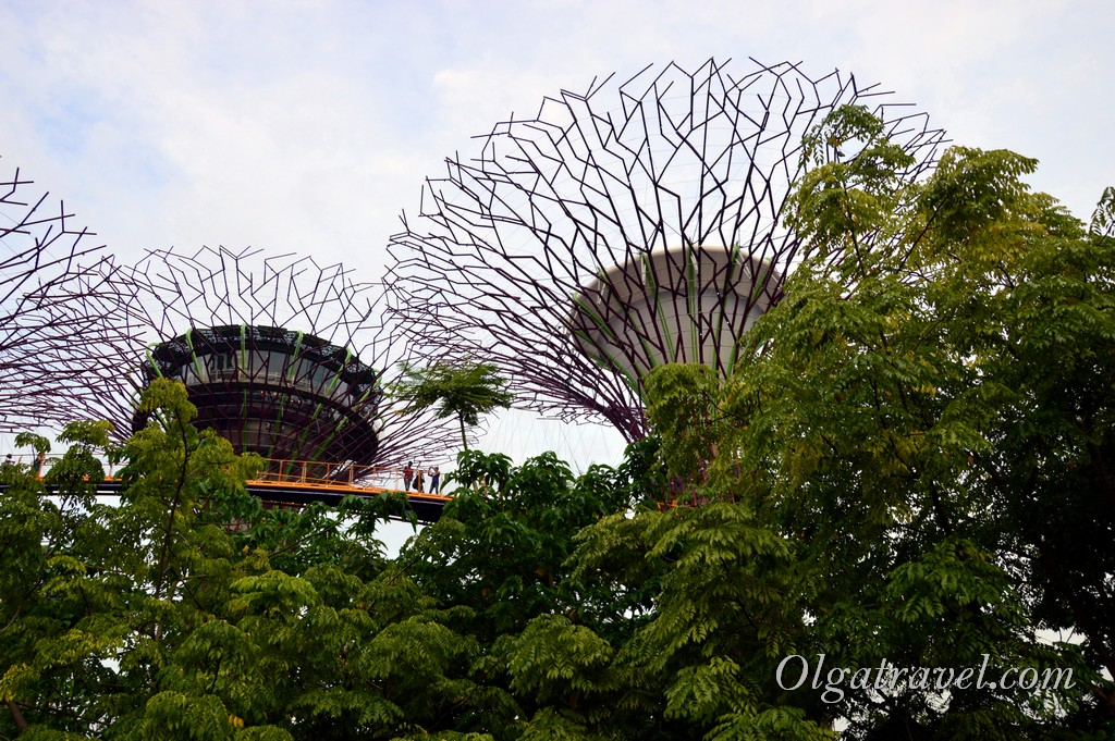 Singapore_gardens_by_the_bay_47