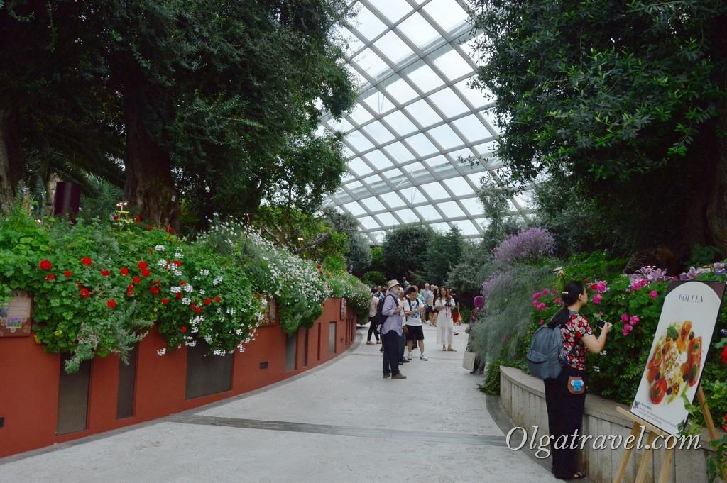 оранжереи в Сингапуре