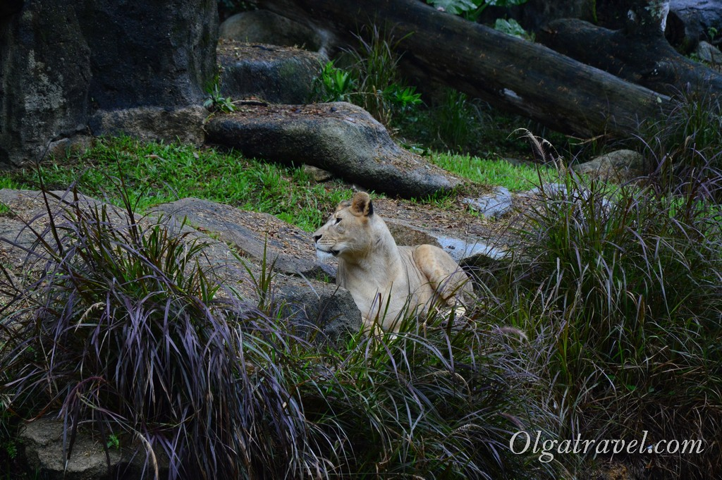 Singapore_zoo_10