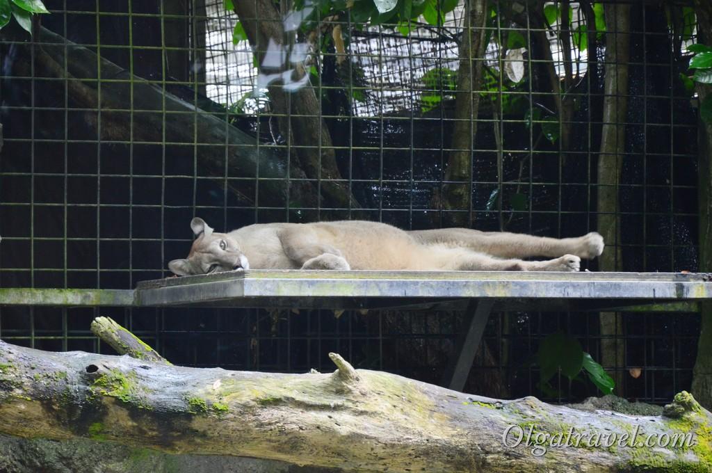 Singapore_zoo_16
