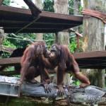 Зоопарк Сингапура: наш отзыв с фото и полезная информация