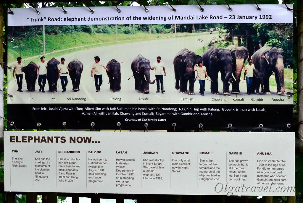 слоны в Азии