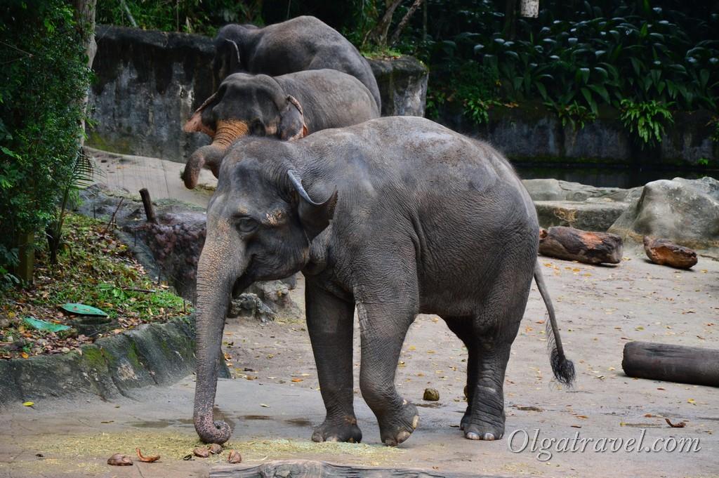 слоны Сингапур