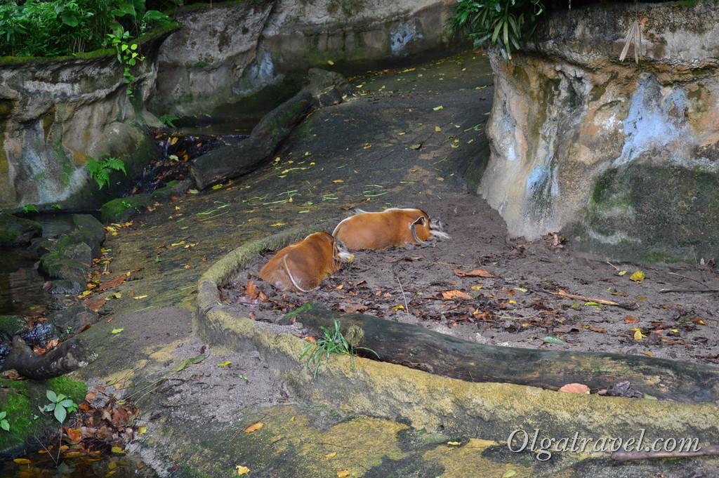 Singapore_zoo_43