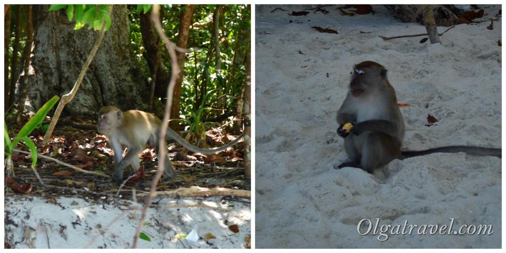 обезьяний остров