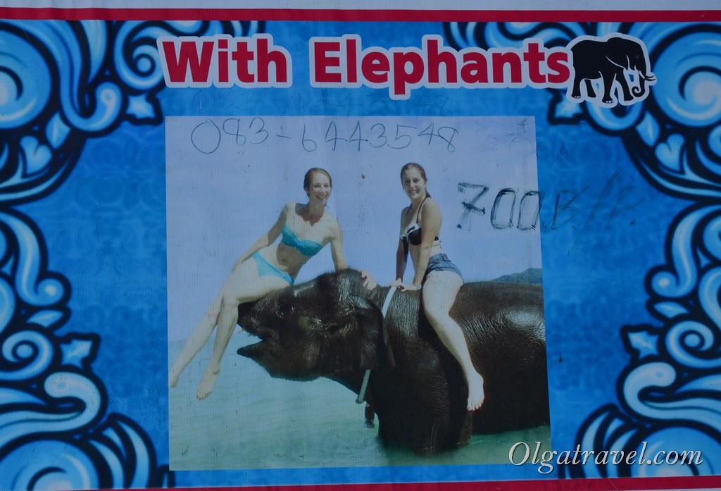 купание со слонами пхукет