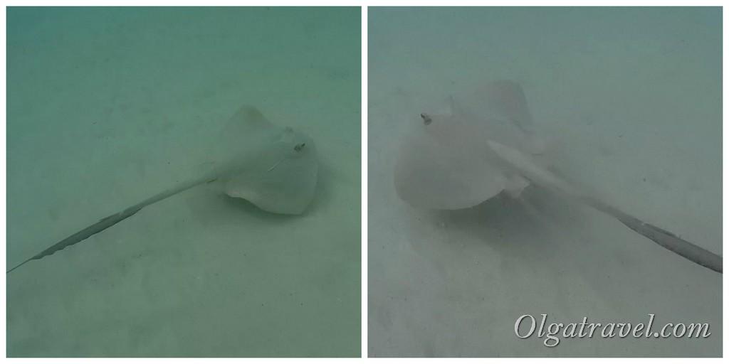 Перхентианы подводный мир