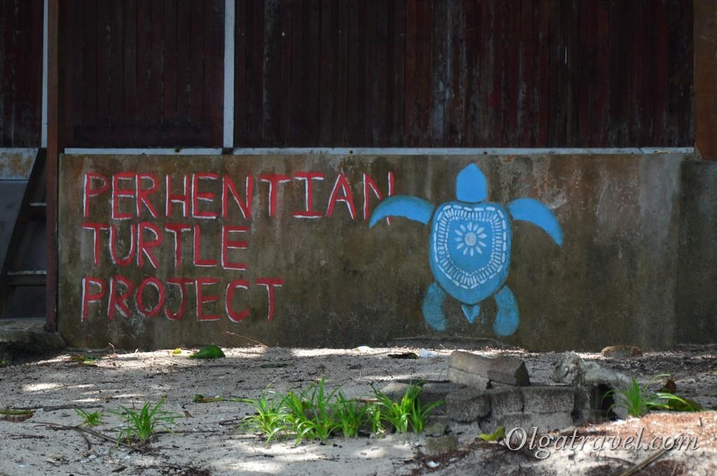 Перхентианы черепахи