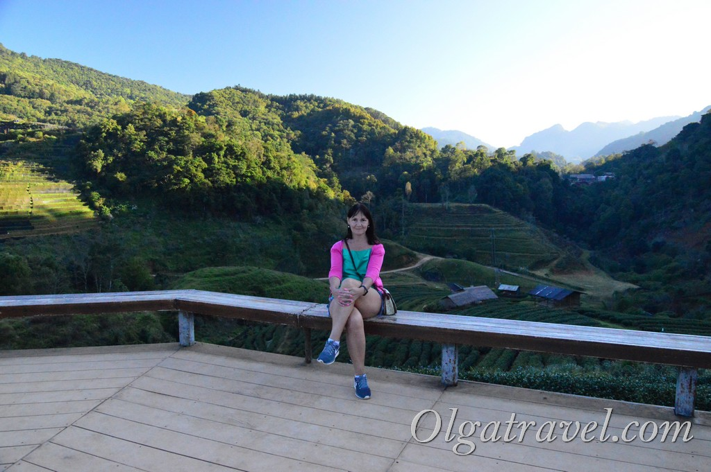 чайные плантации Таиланд